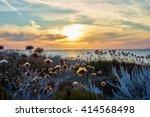 thistles on dunes   sunset at... | Shutterstock . vector #414568498
