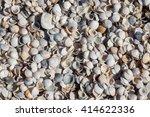 Shells On A Beach Near Falmout...