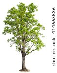tree isolated on white... | Shutterstock . vector #414668836