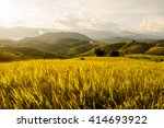 soft focus of rice farm... | Shutterstock . vector #414693922