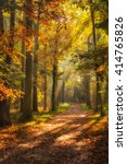 Dutch Forest Landscape With...