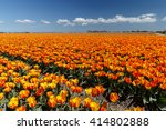 a dutch field with colorful... | Shutterstock . vector #414802888