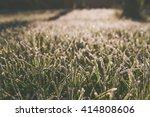 early morning frozen dew on... | Shutterstock . vector #414808606