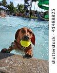 swimming dog - stock photo