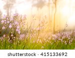 soft focus sweet purple flowers ... | Shutterstock . vector #415133692