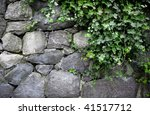 English Ivy Growing On Stone...
