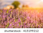lavender field and ray of light ...   Shutterstock . vector #415199212