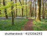 Bluebells In Flower In Woodlan...