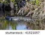 american alligator | Shutterstock . vector #41521057