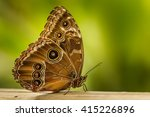 butterfly on fresh green... | Shutterstock . vector #415226896