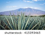 agave tequila landscape to... | Shutterstock . vector #415393465