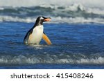 Penguin In The Blue Waves....