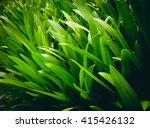Green Plant. Green Leaf