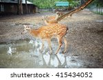 Three Dappled Deers At The...
