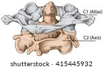 didactic board  cervical spine  ... | Shutterstock . vector #415445932