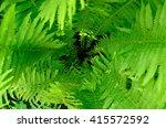 Deep Green Fern Plant Spiral I...