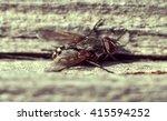 a macro shot of fly in vintage... | Shutterstock . vector #415594252