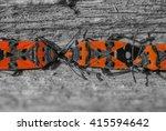 a macro shot of group of bugs... | Shutterstock . vector #415594642