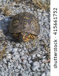 Small photo of Red Eyed Male Alabama Box Turtle / Red Eyed Male Alabama Box Turtle / Red Eyed Male Alabama Box Turtle /