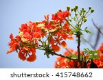 Red Flamboyant Flower