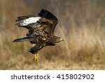 birds of prey   flying common... | Shutterstock . vector #415802902