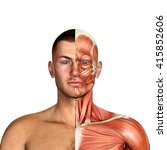 male face muscles anatomy 3d... | Shutterstock . vector #415852606