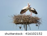 a pair of storks in the nest | Shutterstock . vector #416102152