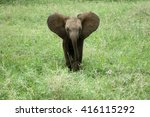Stock photo elephant baby calling his mama 416115292