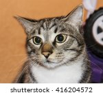 attentive white and gray cat... | Shutterstock . vector #416204572