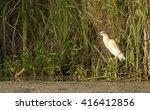 squacco heron | Shutterstock . vector #416412856