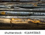 stumps from trees in a wood | Shutterstock . vector #416445865