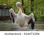 White Pelican  Pelecanus...