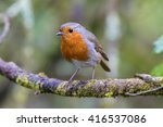 Robin On A Branch In A Woodlan...
