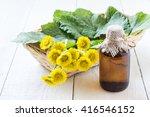 Medicinal Plant Coltsfoot ...