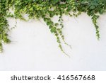 green ivy isolated on a white... | Shutterstock . vector #416567668