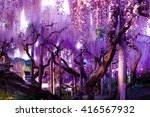 the wisteria the beautiful... | Shutterstock . vector #416567932