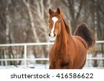red trakehner horse runs gallop | Shutterstock . vector #416586622