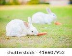 rabbit 1 | Shutterstock . vector #416607952