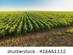 green ripening soybean field ... | Shutterstock . vector #416661112