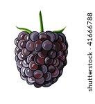 blackberry on white background. ... | Shutterstock .eps vector #41666788