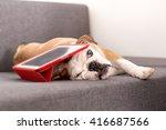 The Puppy Of A Bulldog Lies...