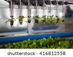 mechanical planting seedlings.  | Shutterstock . vector #416812558