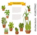 Set Of House Plant Isolated....