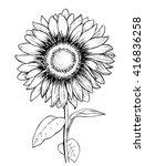 sunflower. hand draw wector... | Shutterstock .eps vector #416836258