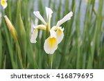 yellow   white flower   Shutterstock . vector #416879695