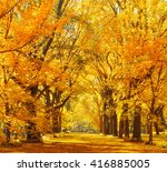 Woods And Autumn Foliage In...