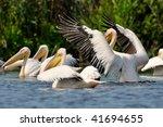 pelicans  pelecanus onocrotalus ... | Shutterstock . vector #41694655