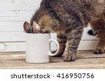 Stock photo funny cat crawled into a white coffee mug design a coffee mug 416950756