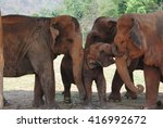 Family Of Elephants In The...