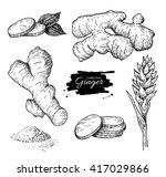 vector hand drawn ginger set.... | Shutterstock .eps vector #417029866